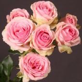 "Роза кустовая премиум ""Динара"" 60 см"