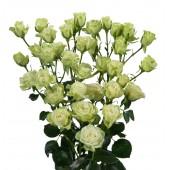 """Роза кустовая """"Вайт"""" белая 60 см"""
