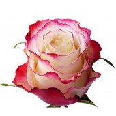 Розовая роза 65 см Topaz Эквадор