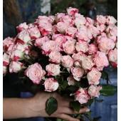 Роза кустовая двуцветная Рефлекс Голландия