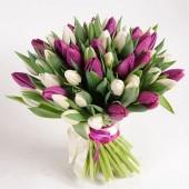 51 тюльпан бело-фиолетовый микс