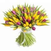 101 тюльпан желто-фиолетовый микс