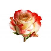 Роза премиум Cabaret 60 см