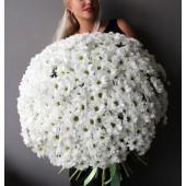 """Букет """"Милые ромашки"""" из 51 ромашковой хризантемы"""