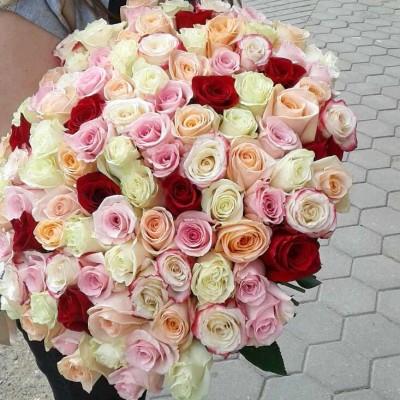 101 роза светлый микс Эквадор 70 см