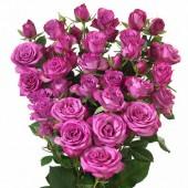 Роза кустовая пионовидная Леди Бомбастик