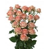 Роза кустовая кремовая Салинеро Голланндия