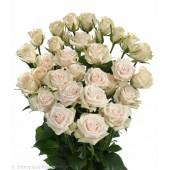 Роза кустовая оранжевая Беби Голландия