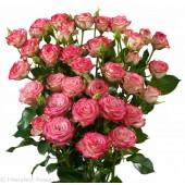 Роза кустовая премиум Хейли 60-70 см